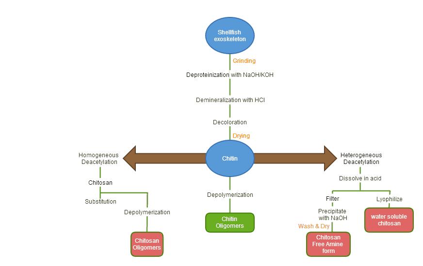 chitosanflow